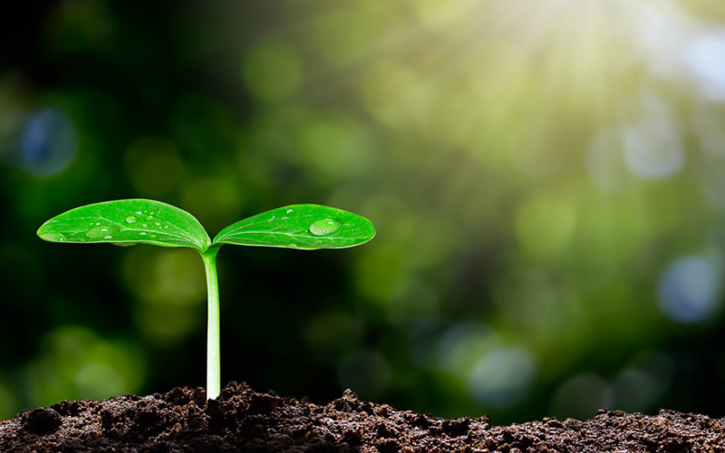 Considerations For The Approval Of Biobased Products By The USDA